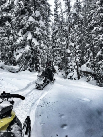 through forest snowmobiling in montana